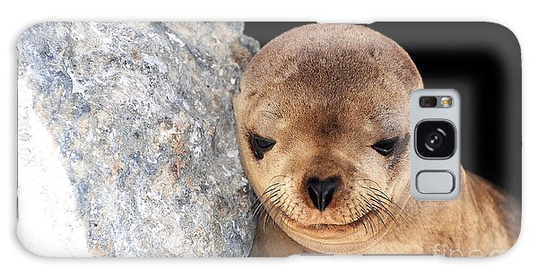 Sleepy Baby Sea Lion Galaxy Case
