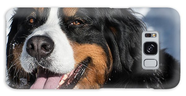 Smiling Bernese Mountain Dog In Winter Snow Galaxy Case