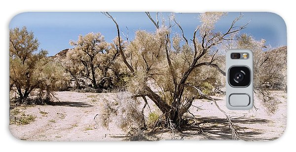 Desert Flora Galaxy Case - Smoke Tree (psorothamnus Spinosus) Growing by Bob Gibbons/science Photo Library