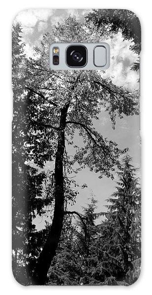 Snake Tree - Lost Lake -whistler Galaxy Case by Amanda Holmes Tzafrir