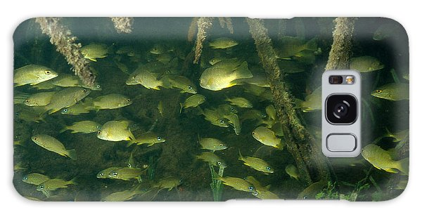 Mangrove Snapper Galaxy Case - Snappers Among Mangrove Roots by Nancy Sefton