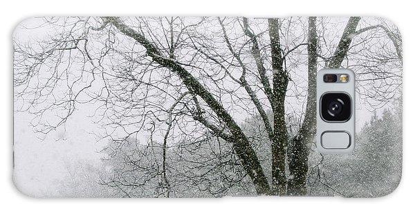 Snow And Pecan Tree Galaxy Case