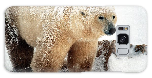 Snow Bear Galaxy Case