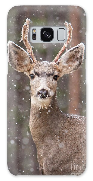 Snow Deer 1 Galaxy Case