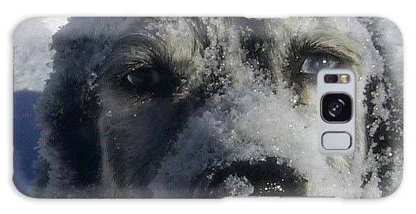 Snow Dog Galaxy Case