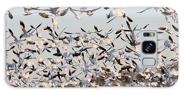 Snow Geese Takeoff From Farmers Corn Field. Galaxy Case by Allan Levin