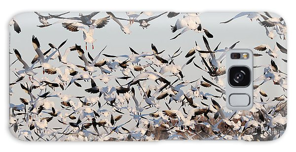 Snow Geese Takeoff From Farmers Corn Field. Galaxy Case