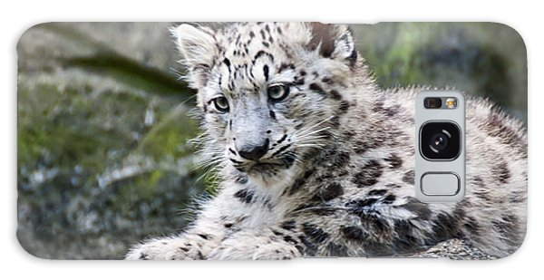 Snow Leopard Cub Galaxy Case by Chris Boulton