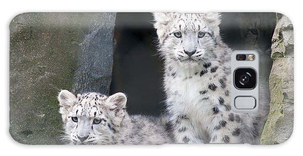 Snow Leopard Cubs Galaxy Case