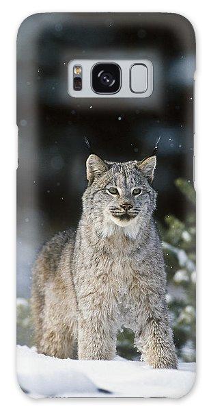 Snow Lynx Galaxy Case