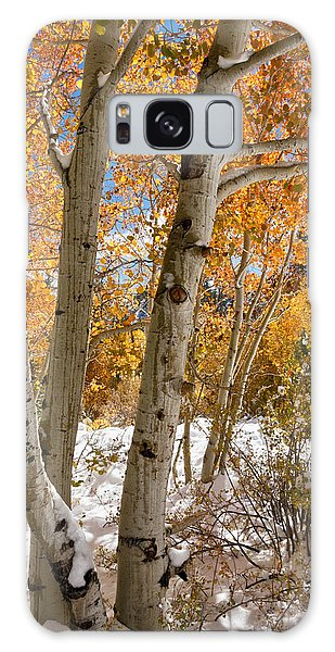 Snowy Aspen Grove Galaxy Case
