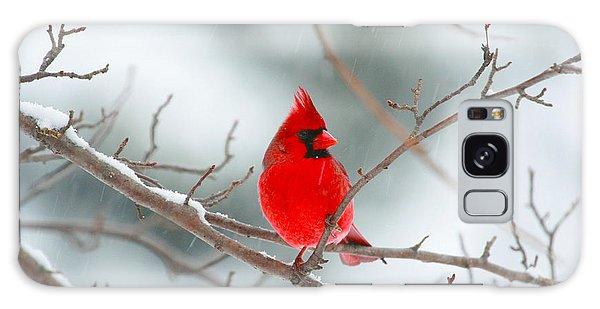Snowy Cardinal Galaxy Case