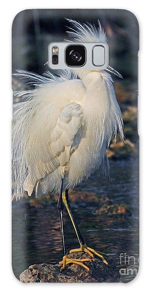 Snowy Egret Show Off Galaxy Case