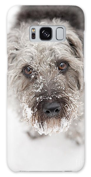 Dog Galaxy S8 Case - Snowy Faced Pup by Natalie Kinnear