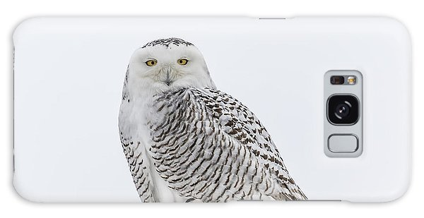 Snowy Owl 2014 1 Galaxy Case