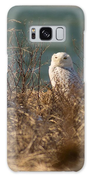 Snowy Owl At The Beach Galaxy Case