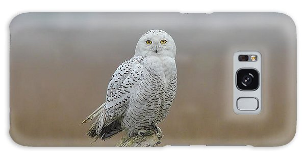 Snowy Owl  Galaxy Case by Daniel Behm
