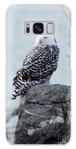 Snowy Owl I Galaxy Case by Butch Lombardi