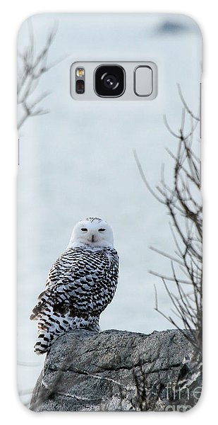 Snowy Owl II Galaxy Case by Butch Lombardi