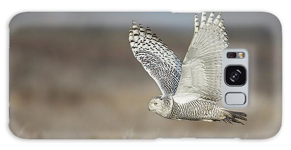 Snowy Owl In Flight Galaxy Case by Daniel Behm