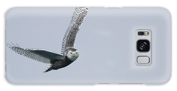 Snowy Owl In Flight Galaxy Case by Gary Hall