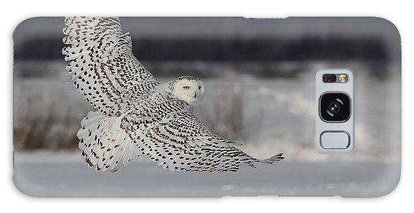 Snowy Owl In Flight Galaxy Case