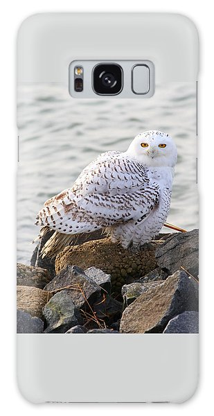 Snowy Owl In New Jersey Galaxy Case