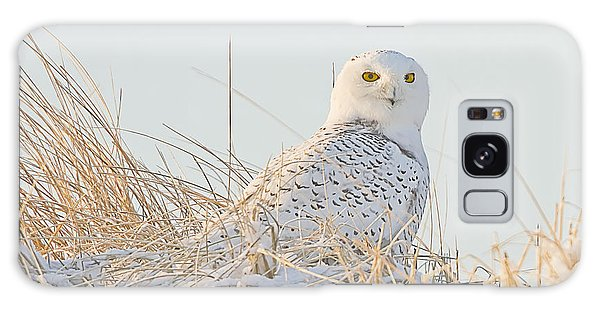 Snowy Owl In The Snow Covered Dunes Galaxy Case