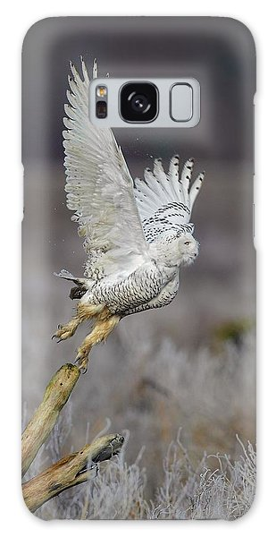 Snowy Owl Liftoff Galaxy Case by Daniel Behm