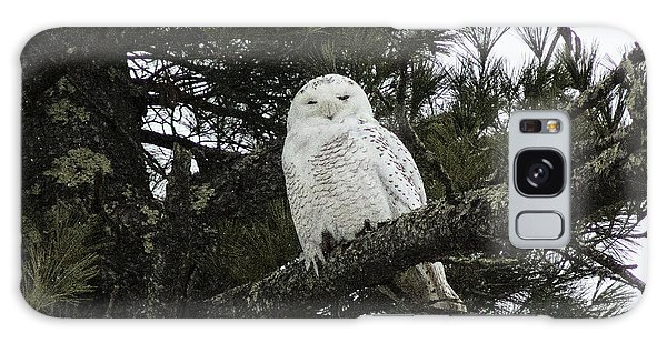 Snowy Owl Galaxy Case by Melissa Petrey