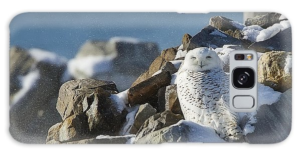 Snowy Owl On A Rock Pile Galaxy Case