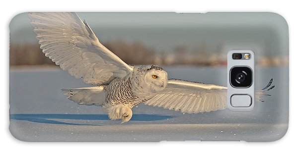Snowy Owl Pictures 7 Galaxy Case
