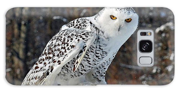 Snowy Owl Galaxy Case by Rodney Campbell