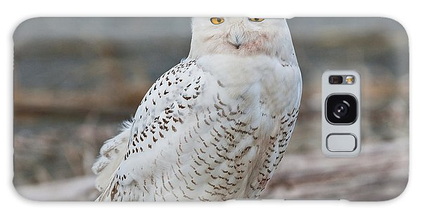 Snowy Owl Watching From A Driftwood Perch Galaxy Case