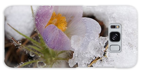 Snowy Pasqueflower Galaxy Case