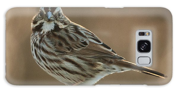 Song Sparrow Galaxy Case by Jim Moore