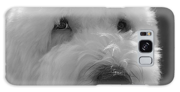 Soulful Eye's Old English Sheep Dog Galaxy Case