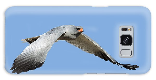 Hawk Galaxy Case - Southern Pale Chanting Goshawk In Flight by Johan Swanepoel
