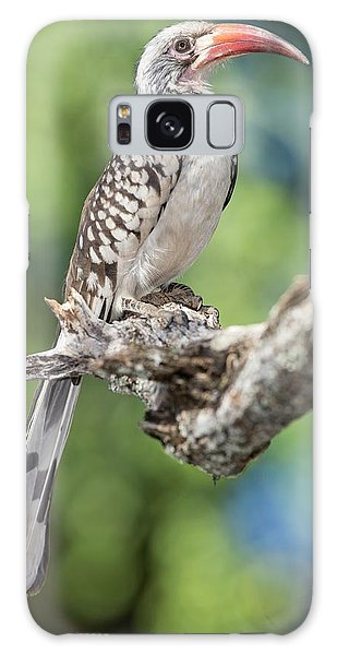 Southern Red-billed Hornbill Galaxy Case