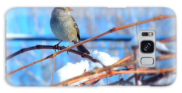 Sparrow On Grapevine Galaxy Case by Heidi Manly