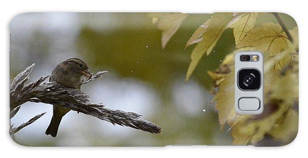 Sparrow Pampas 11 Galaxy Case