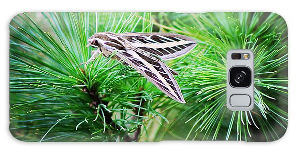 Sphinx Moth Galaxy Case