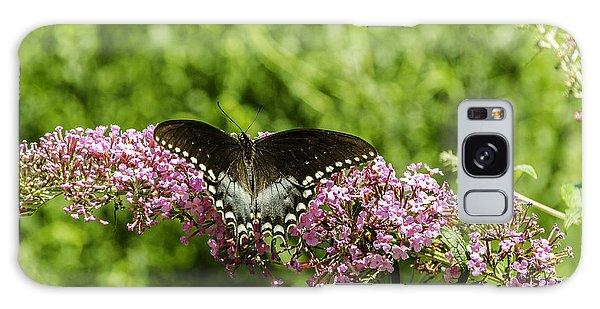 Spicebush Swallowtail Galaxy Case