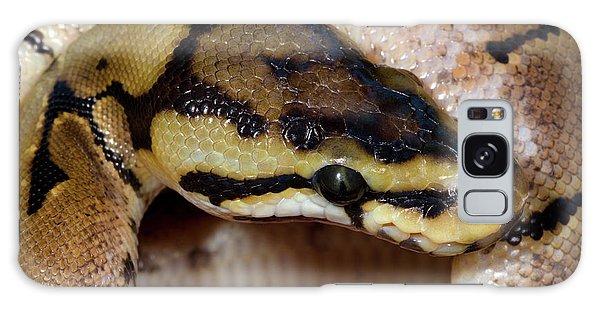 Spider Royal Python Galaxy Case