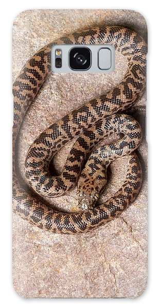 Spotted Python Antaresia Maculosa Top Galaxy Case by David Kenny