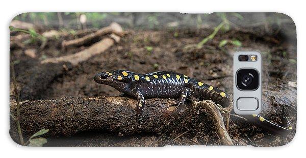 Salamanders Galaxy Case - Spotted Salamander (ambystoma Maculatum by Pete Oxford