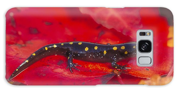 Spotted Salamander Galaxy Case by Paul J. Fusco
