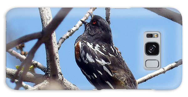 Spotted Towhee Singing Galaxy Case