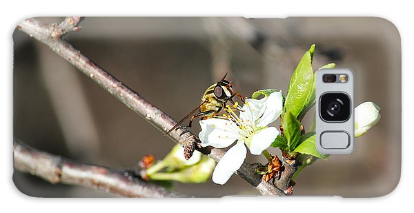 Spring Bee On Apple Tree Blossom Galaxy Case