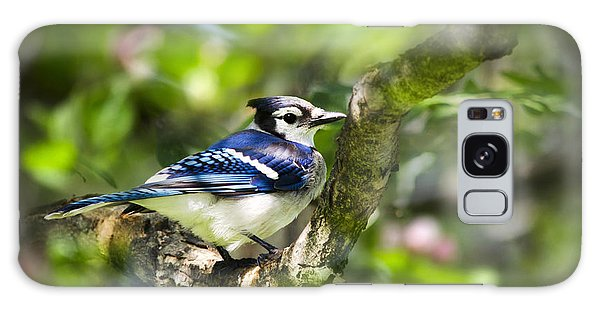 Spring Blue Jay Galaxy Case